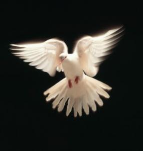Fellesskapet av troende er blitt ledet av Den Hellige Ånd